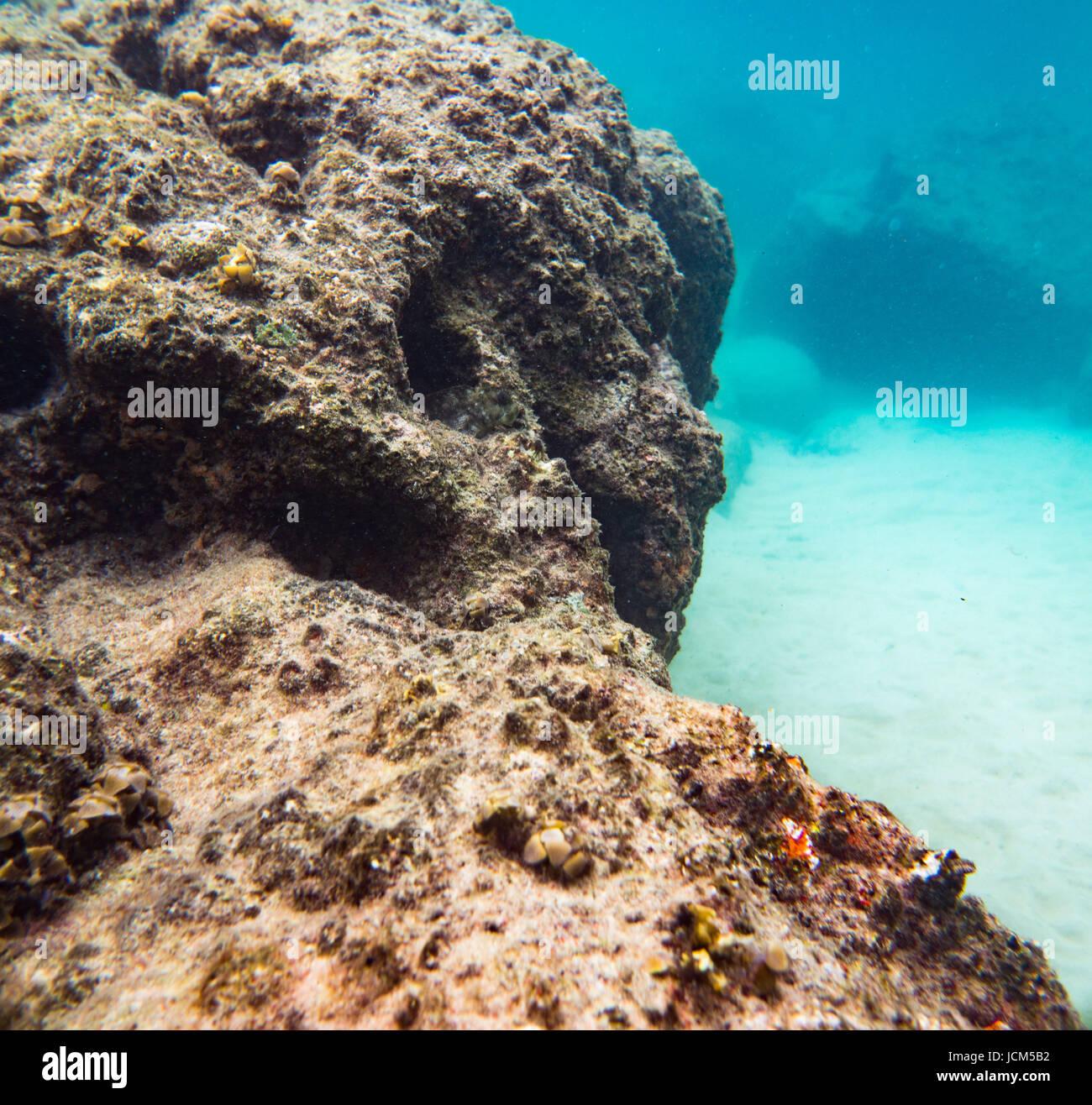 Rocks reef stockfotos rocks reef bilder seite 26 alamy - Aquarium hintergrund ausdrucken ...