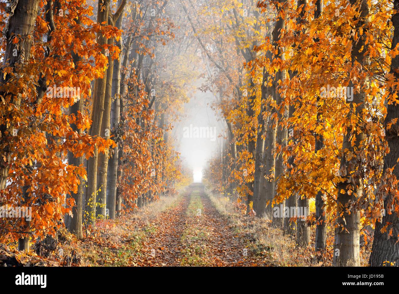 Eine Gasse mit Laub auf dem Boden, gesäumt von Bäumen im Herbst Farben zeigen große Perspektive und Stockbild