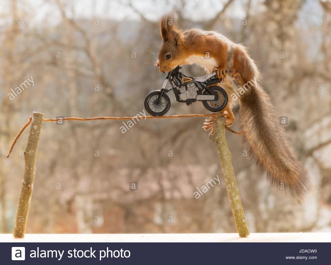 Eichhörnchen stehend auf einem Motorrad auf einem Draht Stockfoto ...