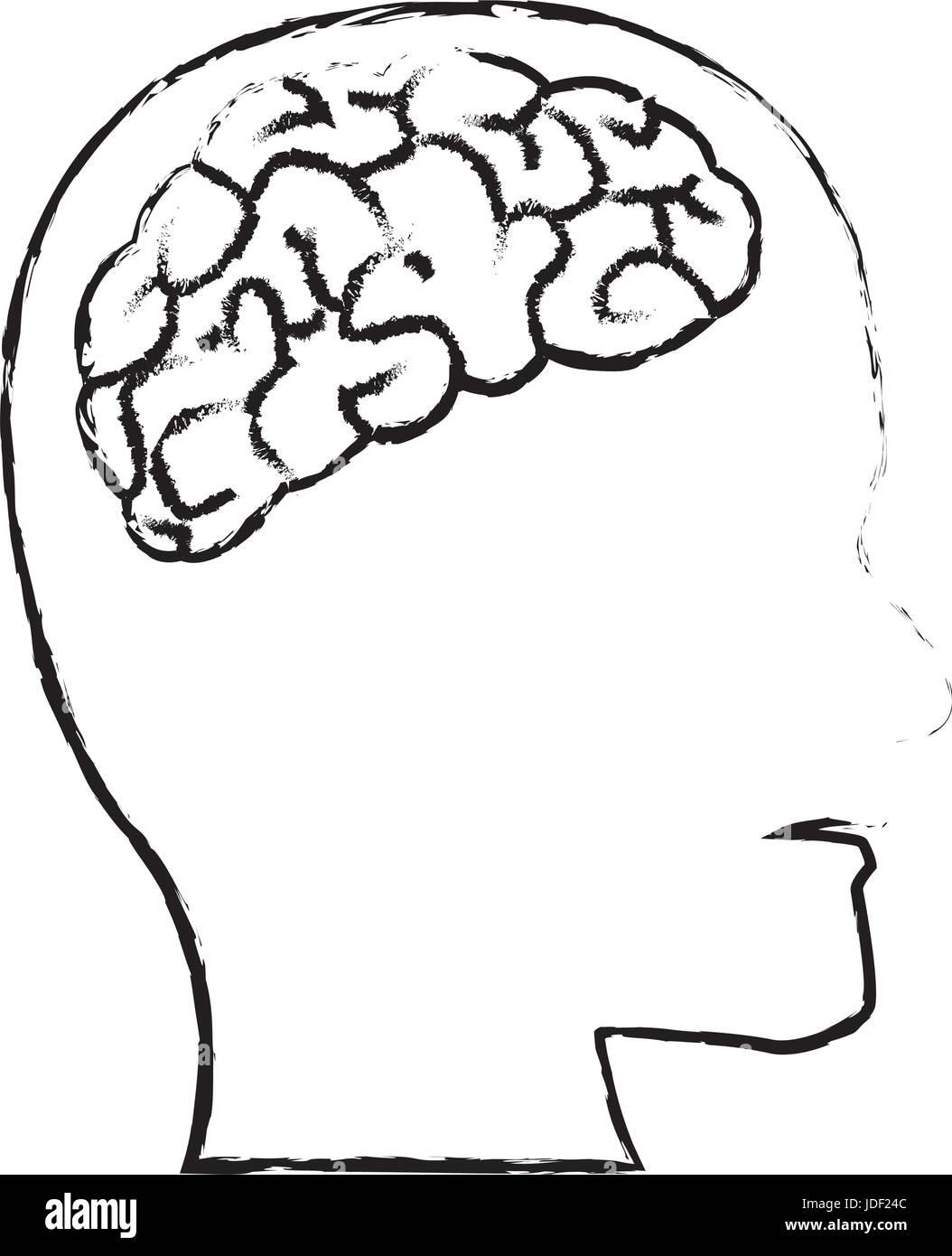 Profil von menschlicher Kopf mit Gehirn-Anatomie Vektor Abbildung ...