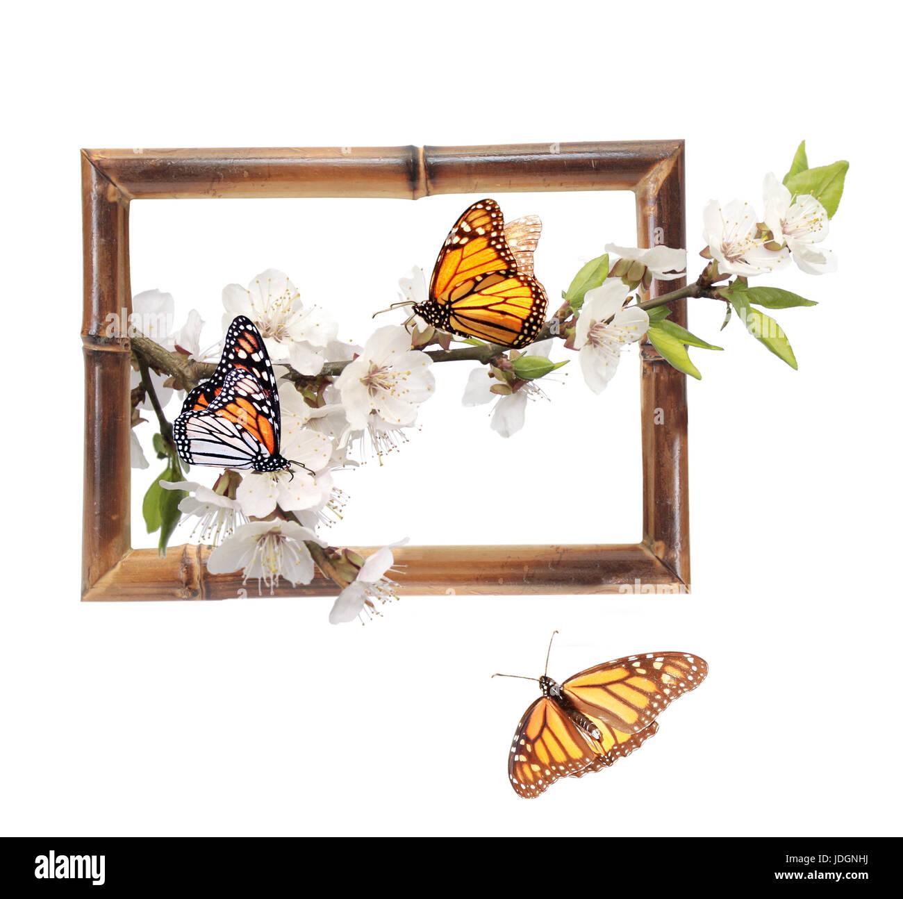 Fein Einfache Monarchfalter Malvorlagen Fotos - Beispiel Anschreiben ...