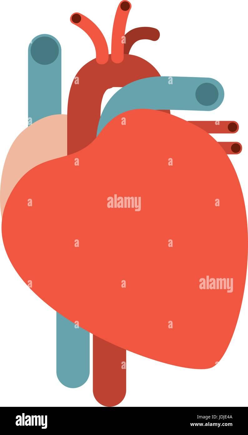 Human Heart Illustration Stockfotos & Human Heart Illustration ...