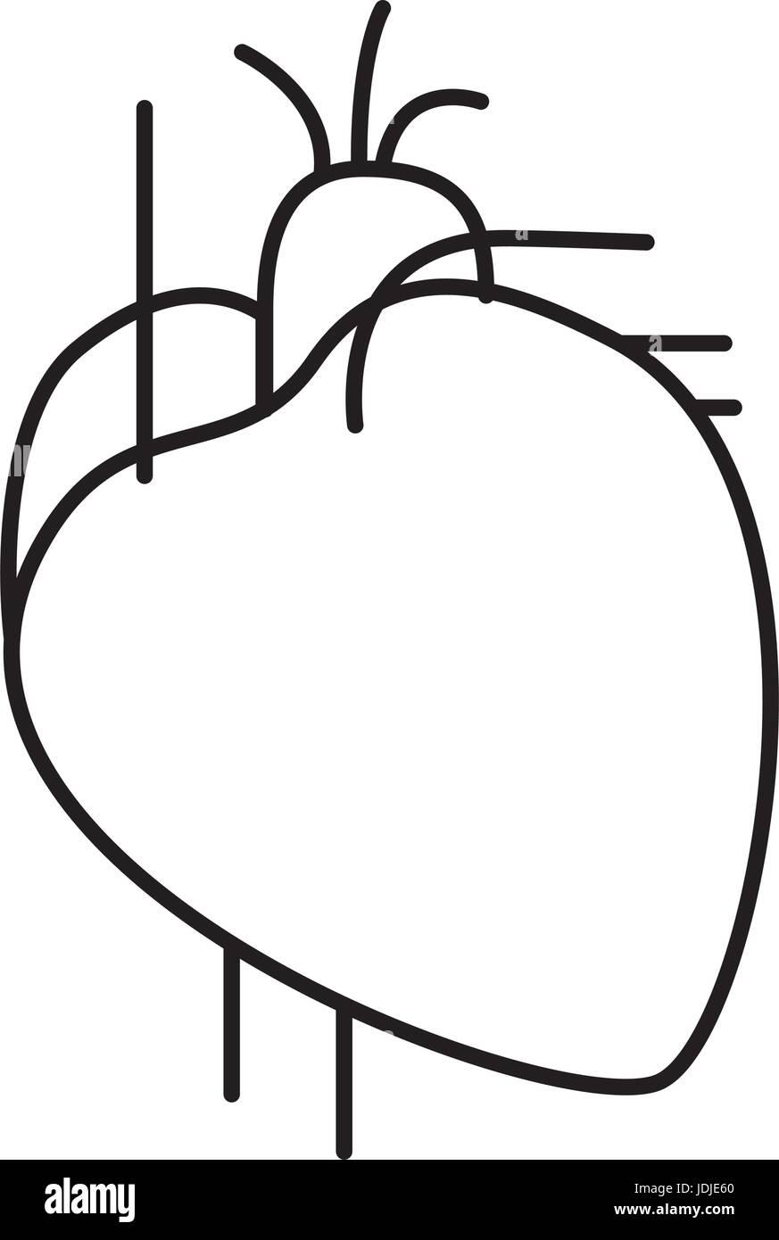 die Hand zeichnen Kontur Herz System menschlicher Körper Vektor ...