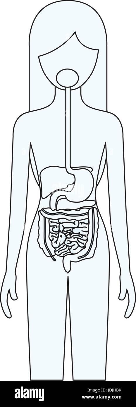 Fantastisch Anatomie Des Verdauungssystems Antworten Fotos ...