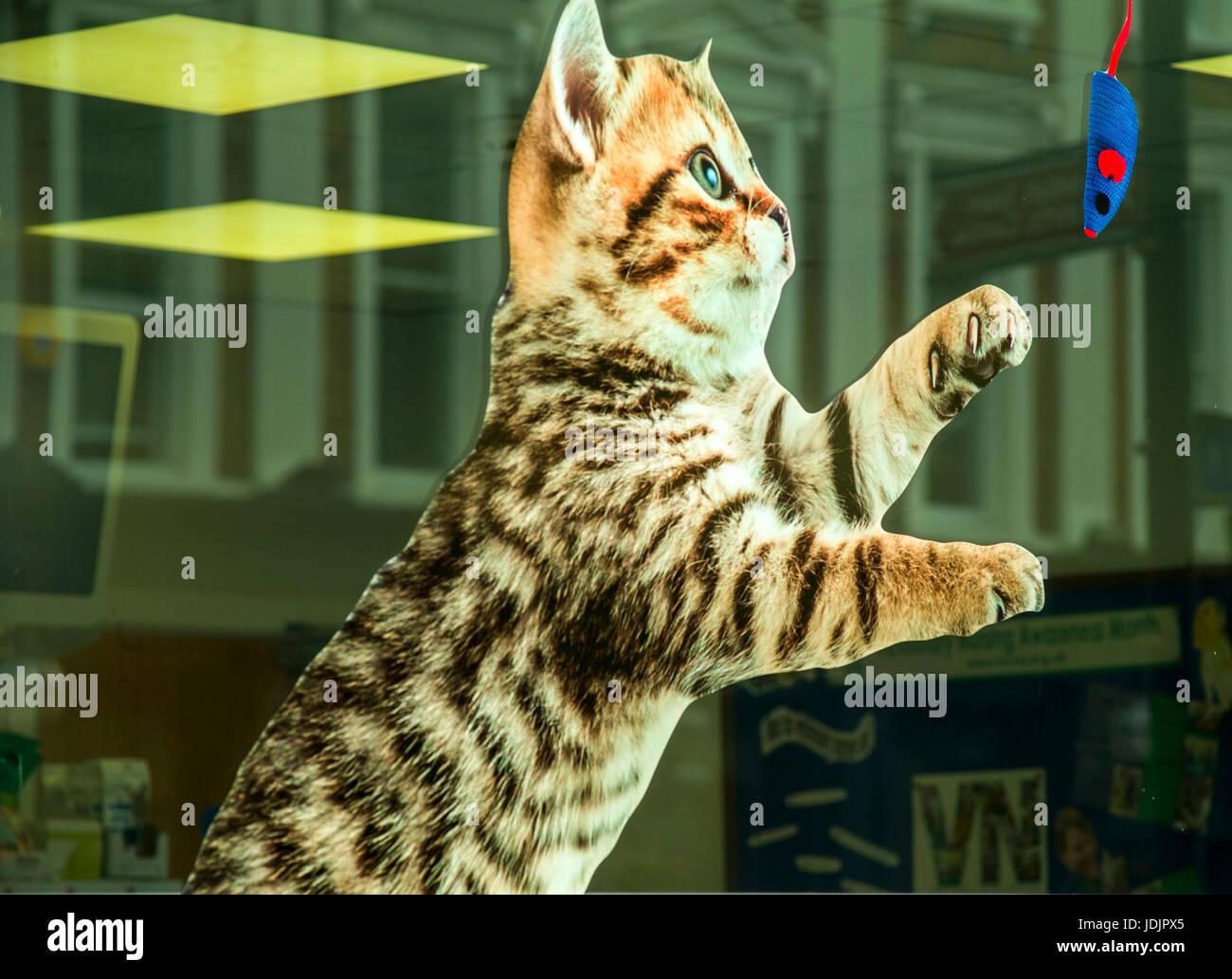 Katze spielt mit Spielzeug Maus Fensteraufkleber im Veterinär-Fenster Stockfoto
