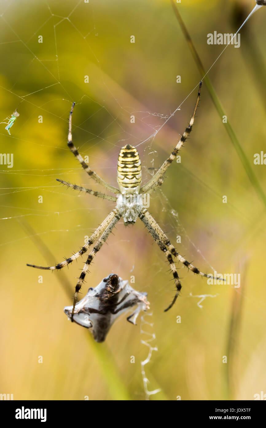 Großartig Spinnen Kartenvorlage Zeitgenössisch - Beispiel Business ...