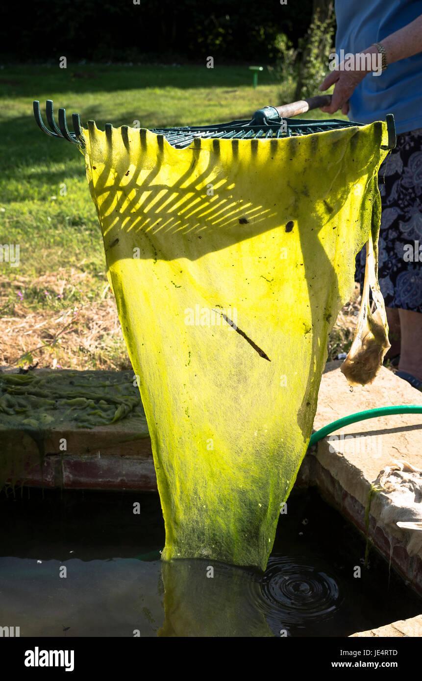 Ein kleiner Garten Pool mitten im Sommer in UK entfernen Decke Unkraut Stockbild