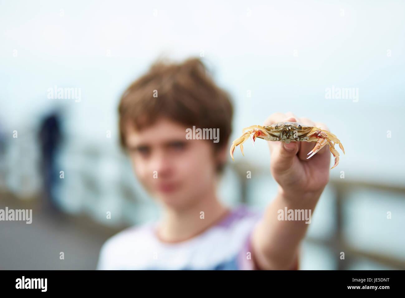 Junge (11) hält sich eine Krabbe Stockbild