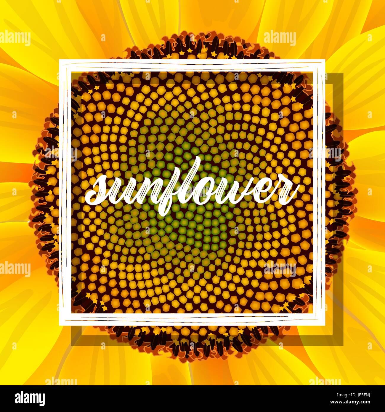 Sunflower Vectors Stockfotos & Sunflower Vectors Bilder - Alamy
