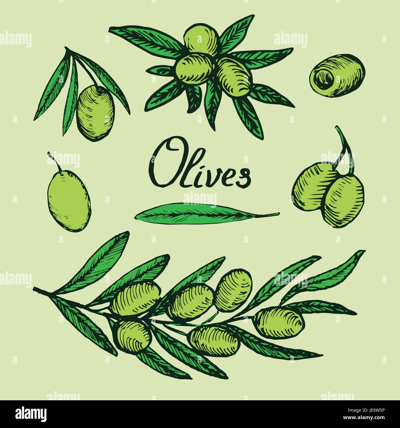 Farbe Olivenzweige, Blätter und Früchte Bühnenbild, mit Inschrift ...
