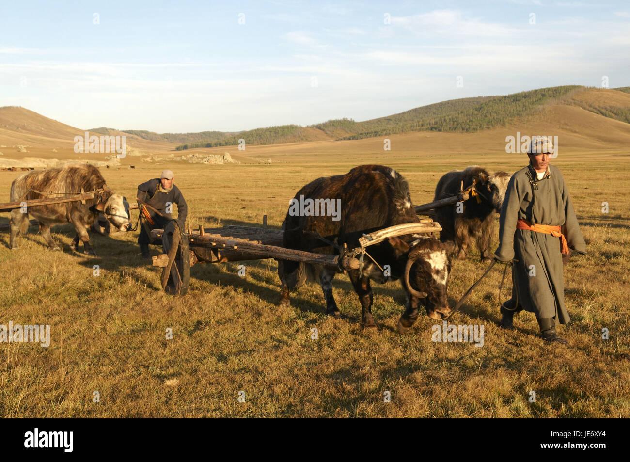 Mongolei, Zentralasien, Provinz Arkhangai, Nomaden, Yaks, Kutschen, Stockfoto