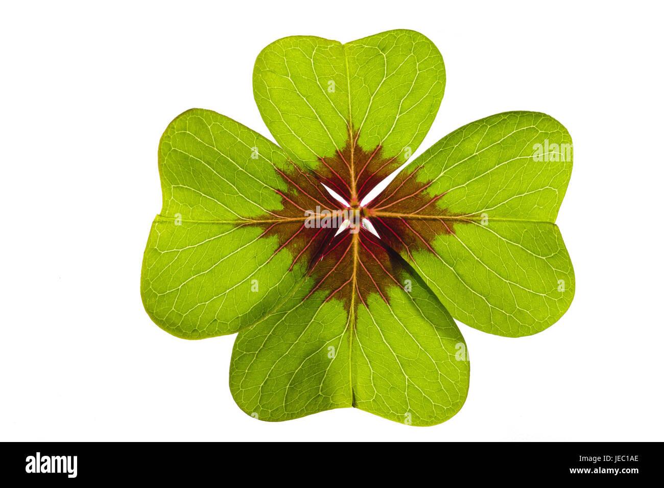 Kleeblatt 4 Blätter
