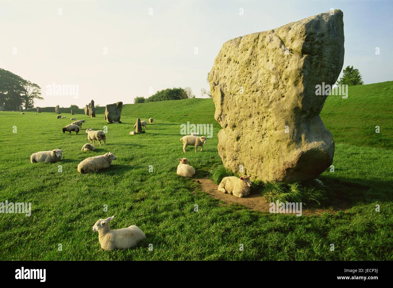 Großbritannien, England, Wiltshire, Avebury, Steinkreis, Schafe, Europa, Süd schmale Land, Ort von Interesse, Stockbild