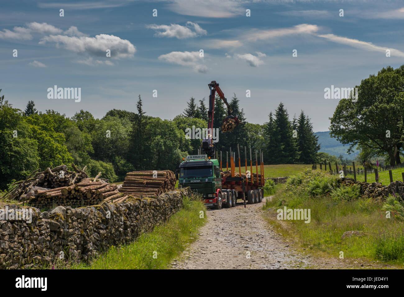 timber stacks stockfotos timber stacks bilder alamy. Black Bedroom Furniture Sets. Home Design Ideas