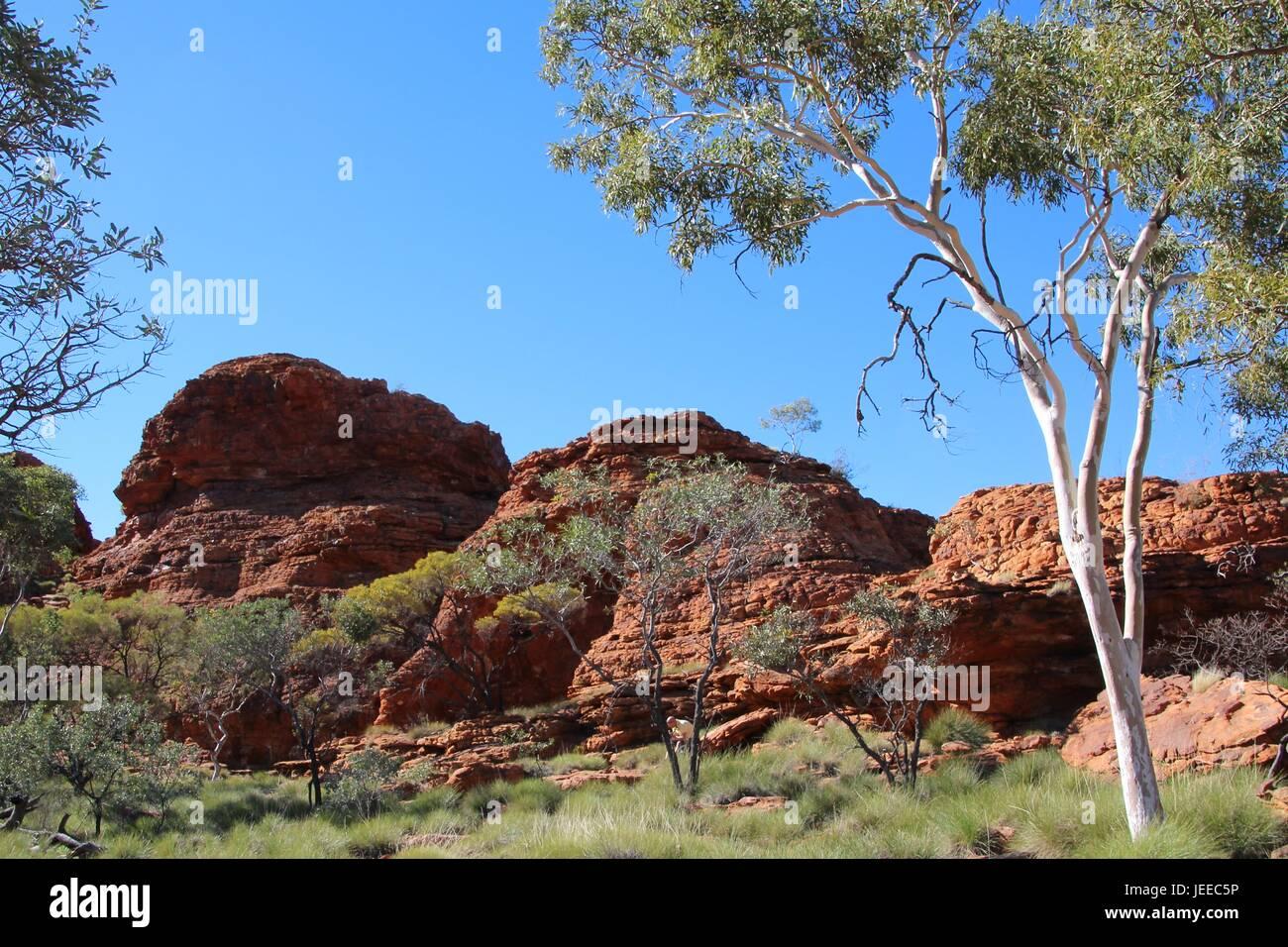 Felsformation am Kings Canyon in Australien Stockbild