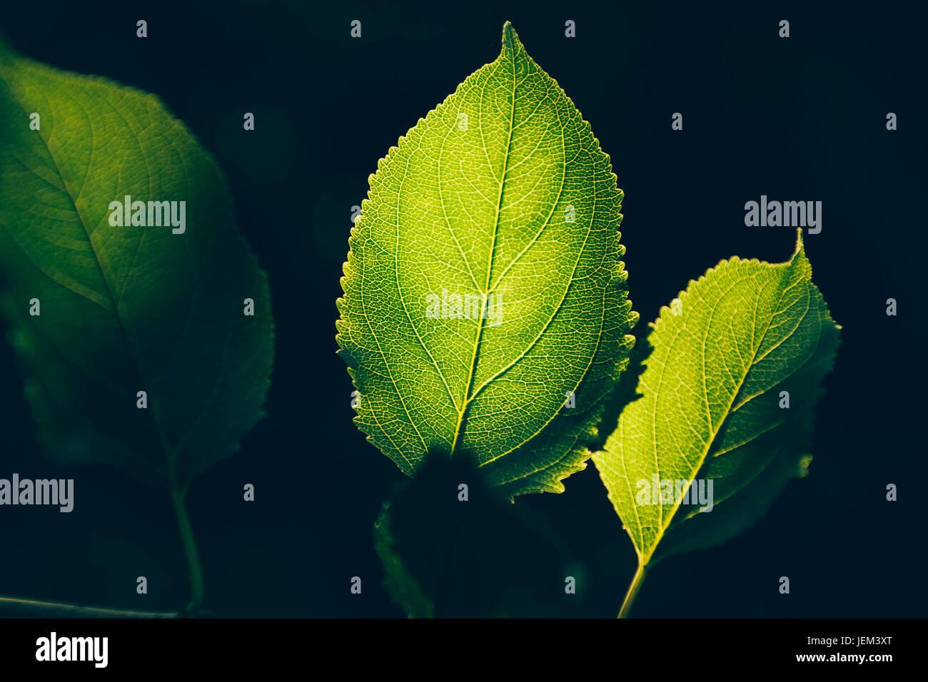 Grüne Federblättern Stockbild