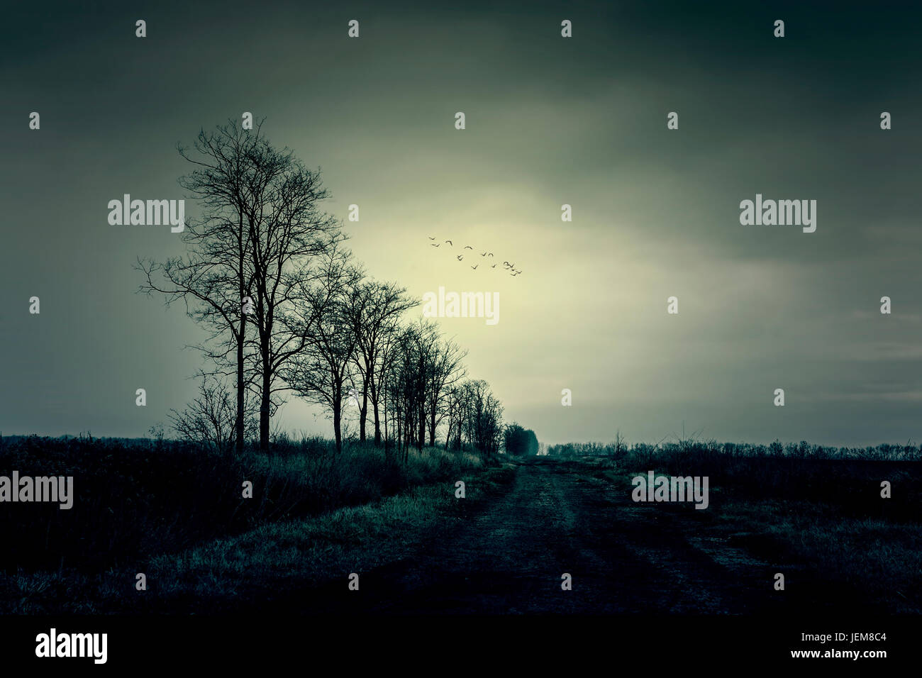 Stimmungsvolle Foto trockene Bäume Stockbild