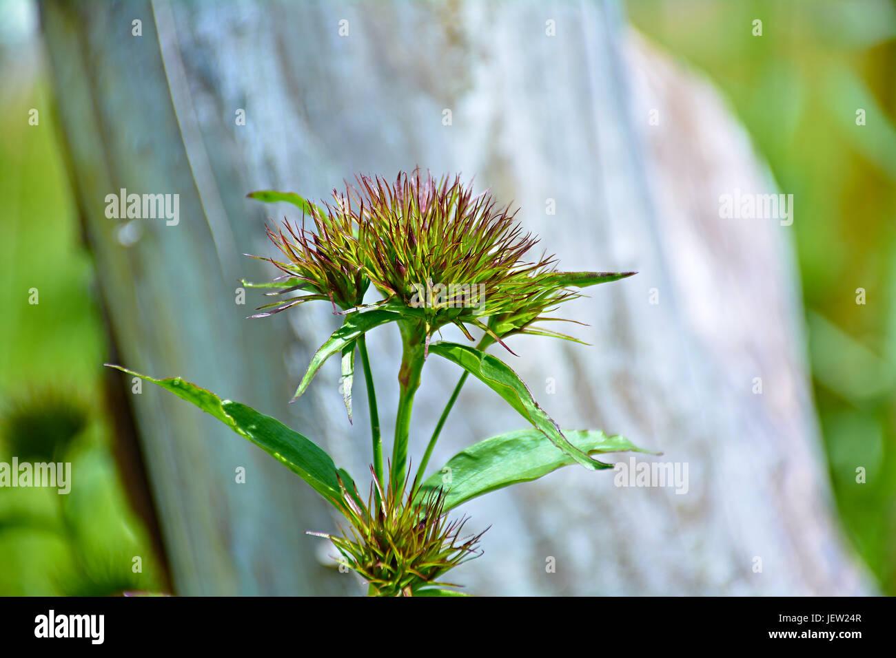 Turkish Flowers Stockfotos & Turkish Flowers Bilder - Seite 2 - Alamy