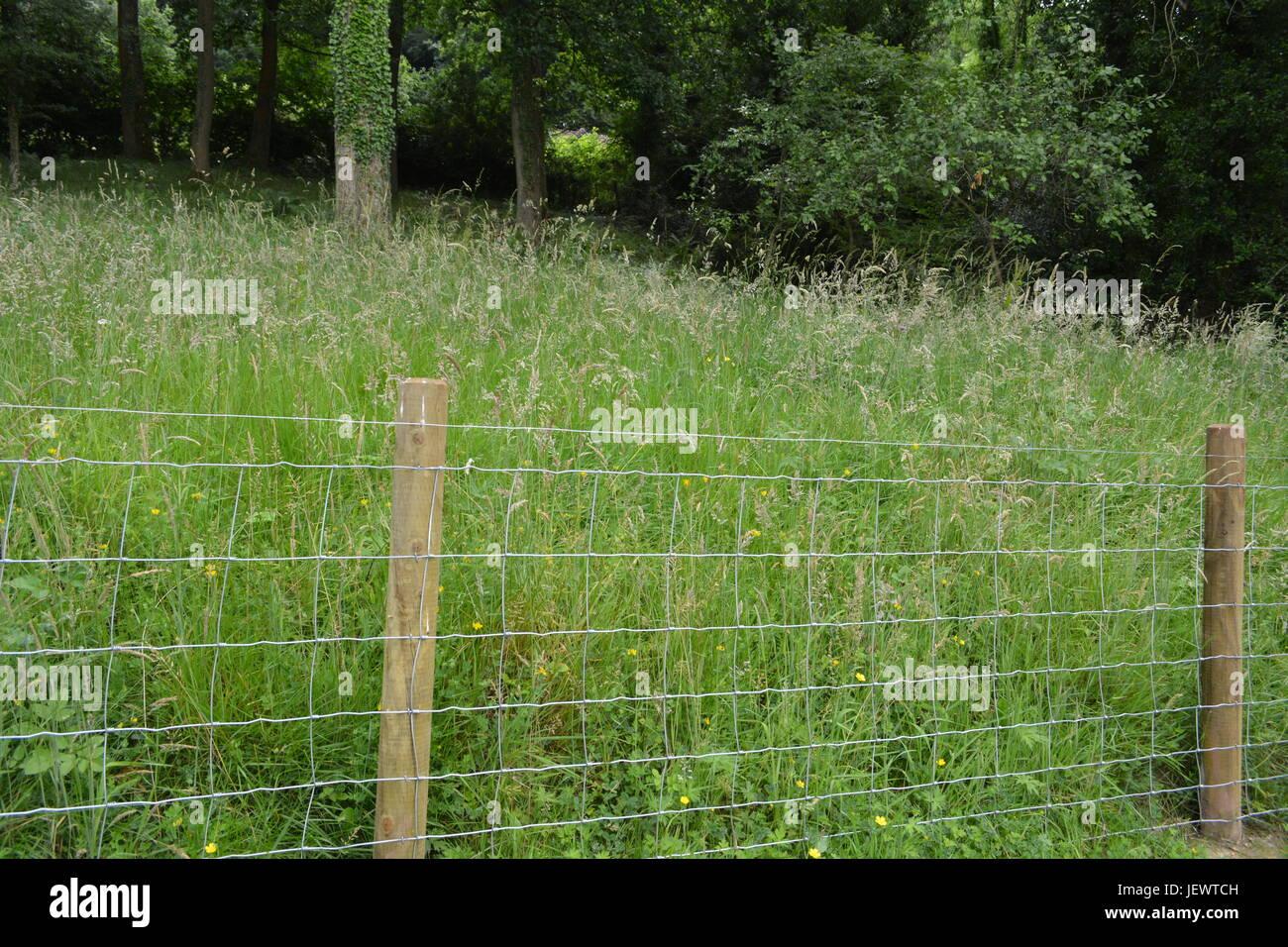 Drahtgitter garten Lager Zaun mit Holz Holz- beiträge Regalständer mit hohen Wiese Gräser hinter Stockbild