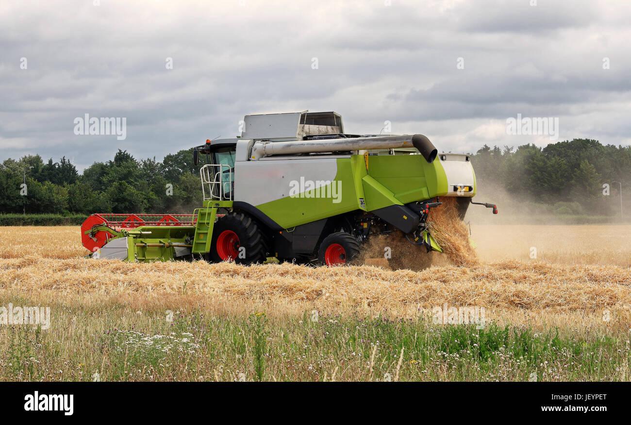 Schneiden von Weizen in einem Feld im ländlichen England Mähdrescher Stockfoto