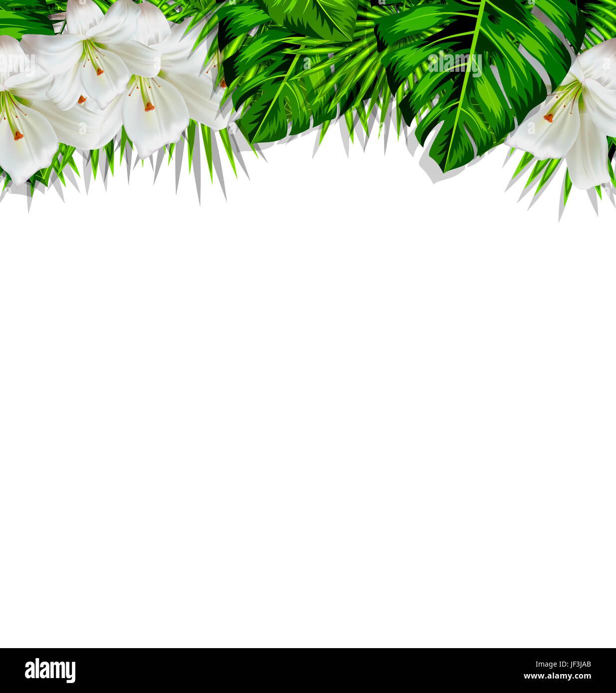 Frame Border Hintergrund Zweig mit tropischen Blättern und weißen ...