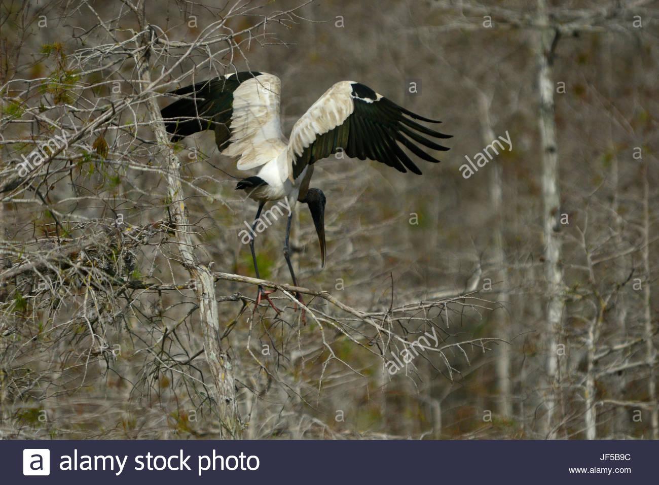 Ein Holz-Storch mit ausgebreiteten Flügeln. Stockbild