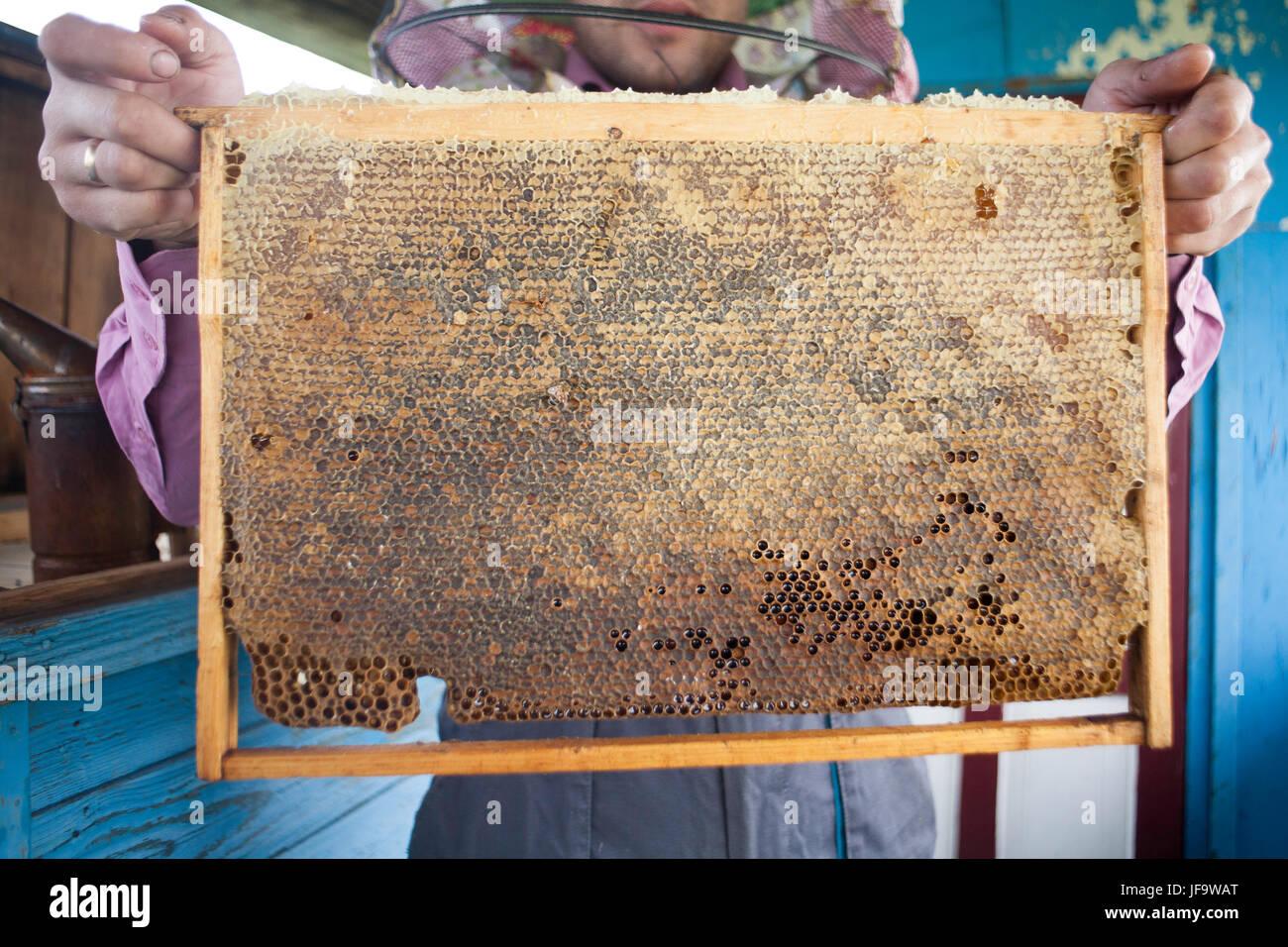 Meister Imker Bienenwaben aus Wachs in einem Holzrahmen von einem ...