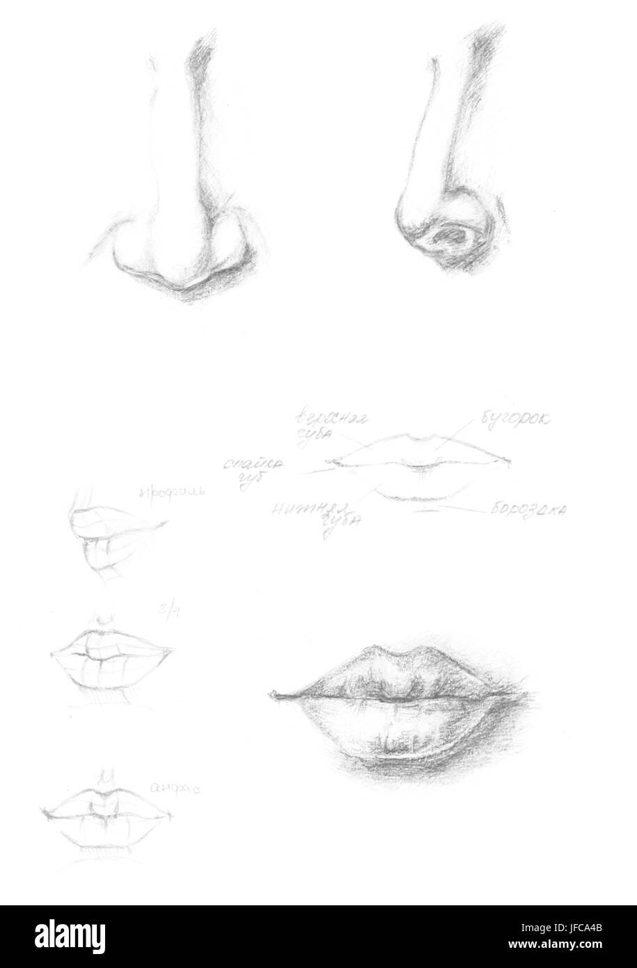 Von Hand gezeichnete menschliche Nase und Lippen Symbol Abbildung ...