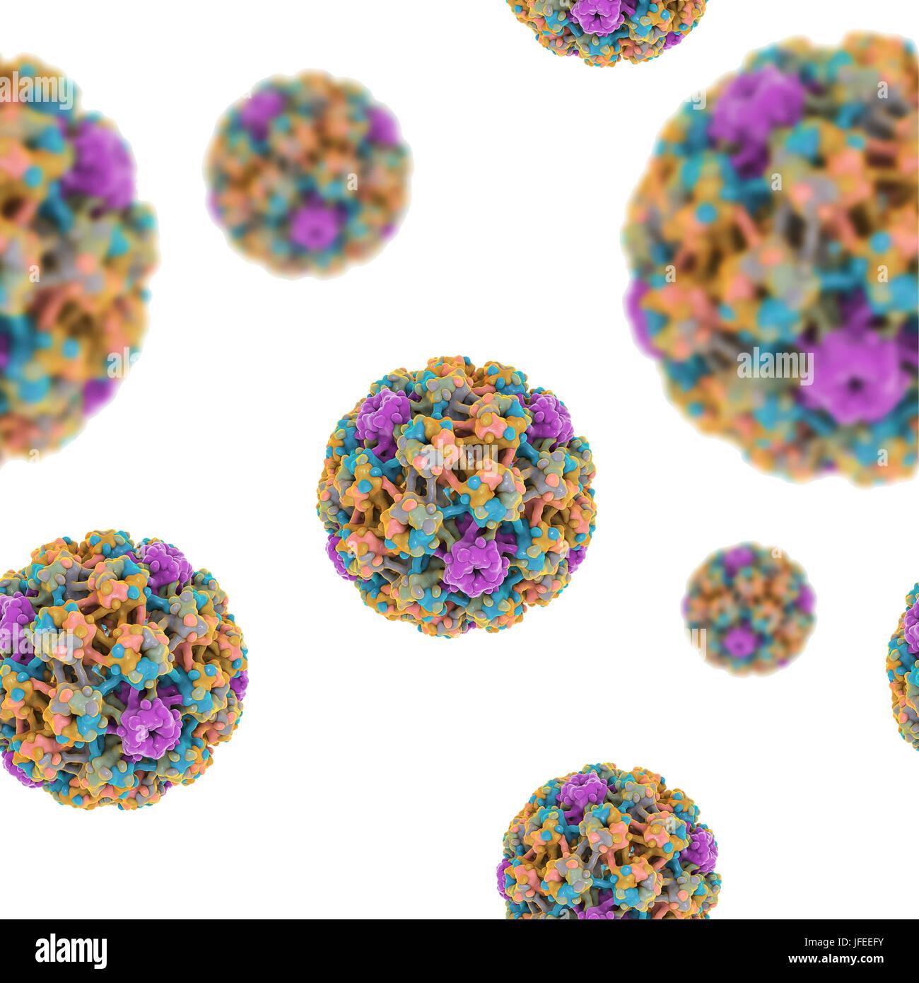 human papilloma virus stockfotos human papilloma virus. Black Bedroom Furniture Sets. Home Design Ideas