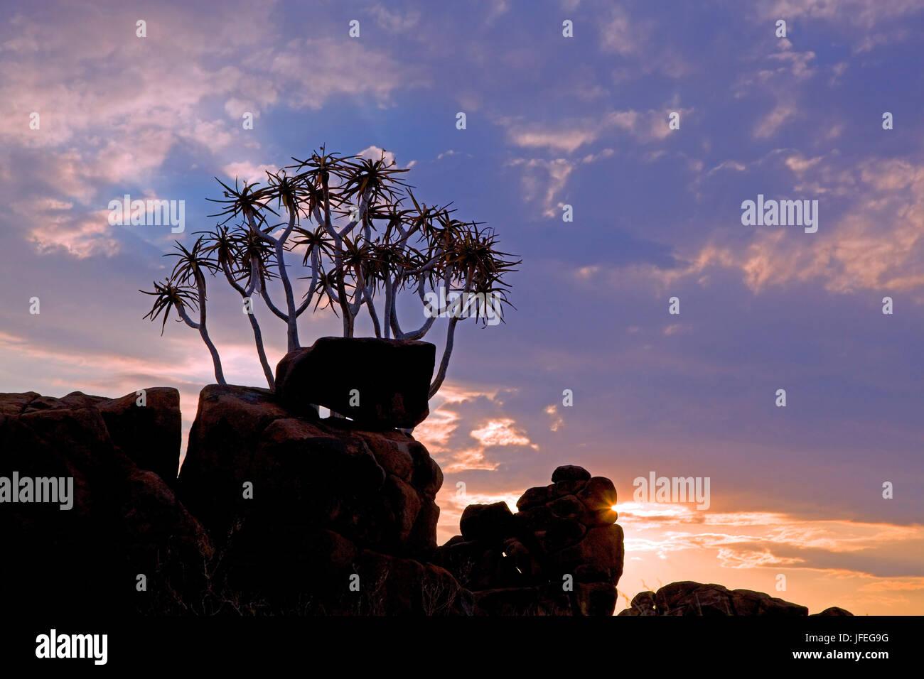 Afrika, s? Dliches Afrika, Namibia, Karas Region, Sukkulente, K? Cherbaum, Stockbild