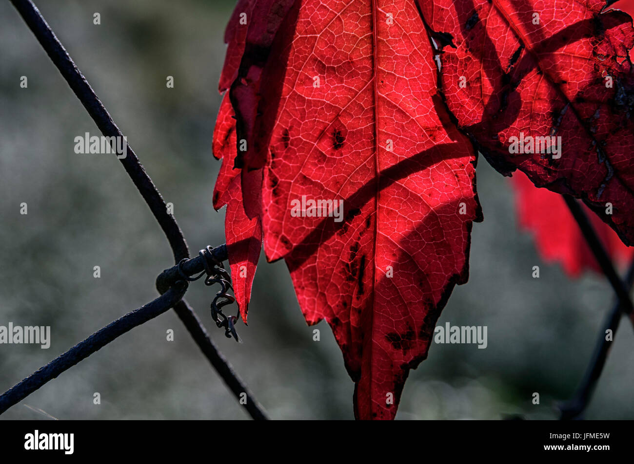 Red Mesh Fence Stockfotos & Red Mesh Fence Bilder - Alamy