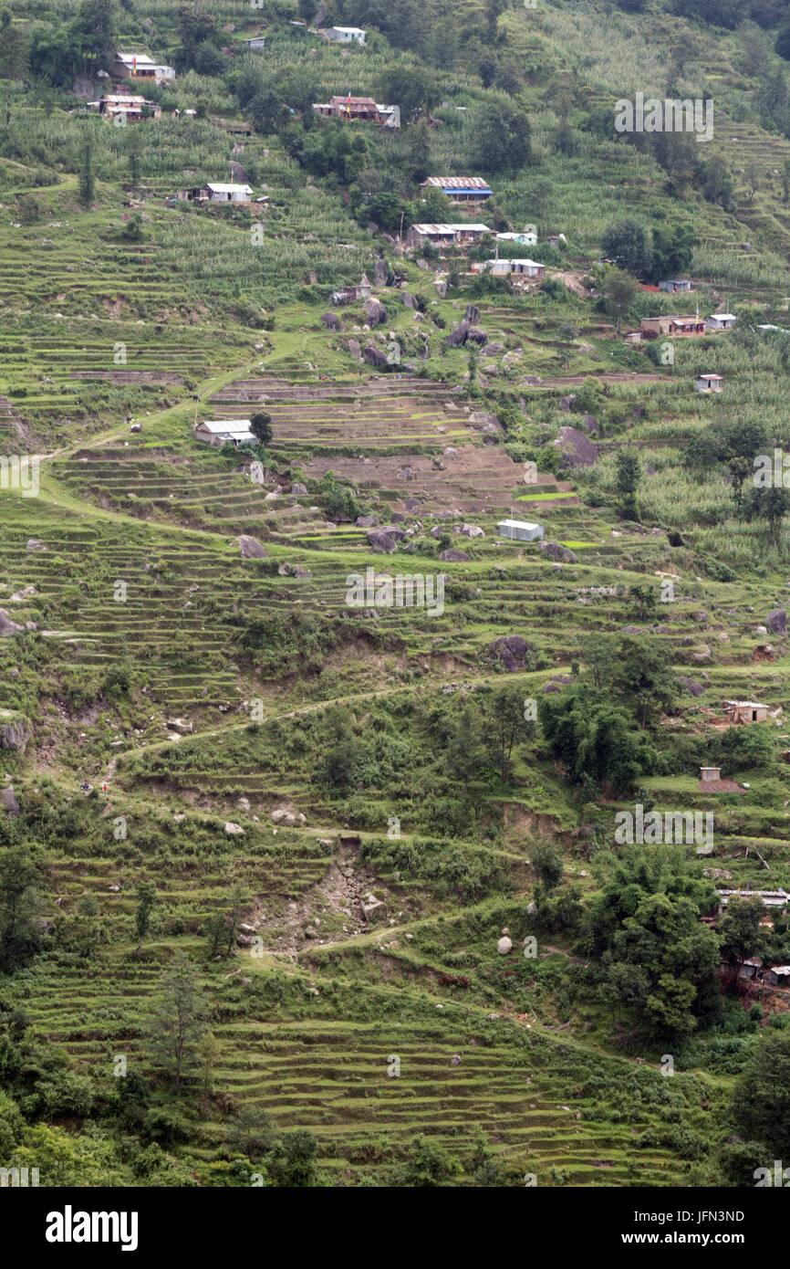 Die Zick-Zack-Wege und Terrassen am Hang durch die Reis-Plantagen im ...