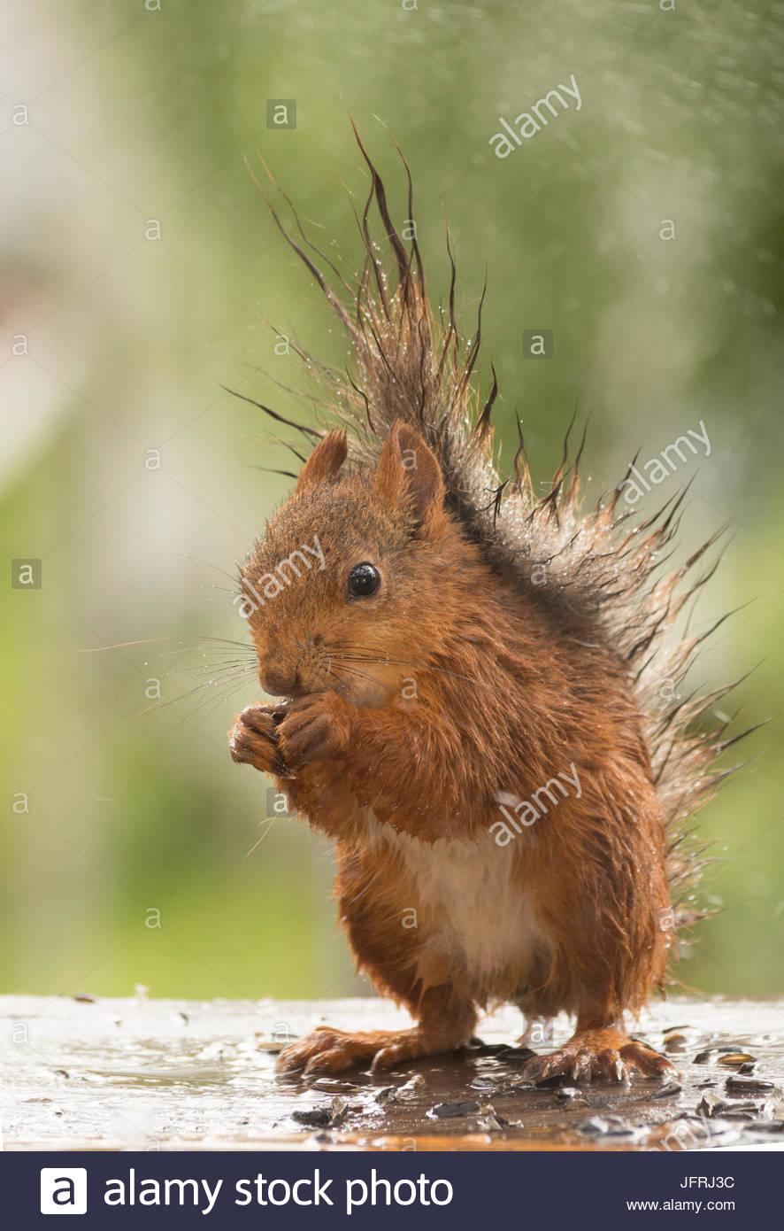 Feuchte Eichhörnchen po rn videos