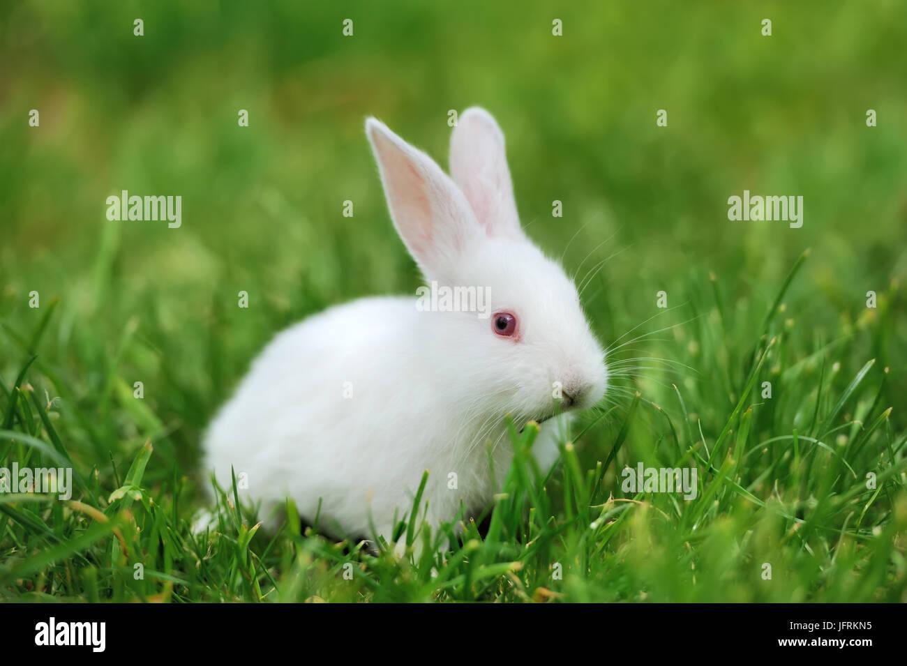 Baby weiße Kaninchen in Frühlingsgrün grass Hintergrund Stockfoto