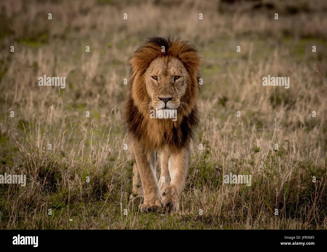 Schöne afrikanische Tierwelt Stockbild