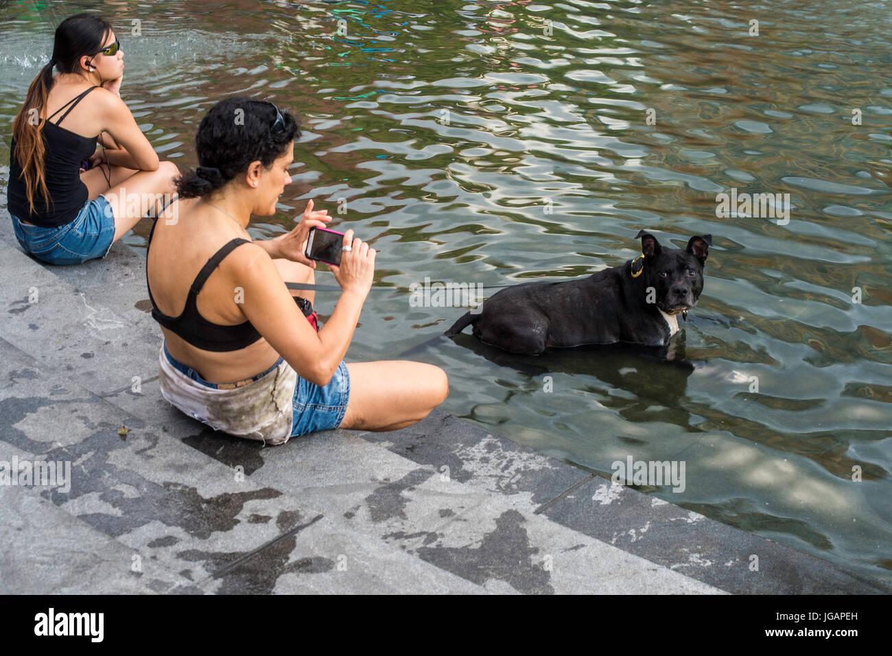 New York, NY 7. Juli 2015 - eine Frau, die ein Bild von ihrem American Pit Bull Hund in den Brunnen im Washington Stockbild