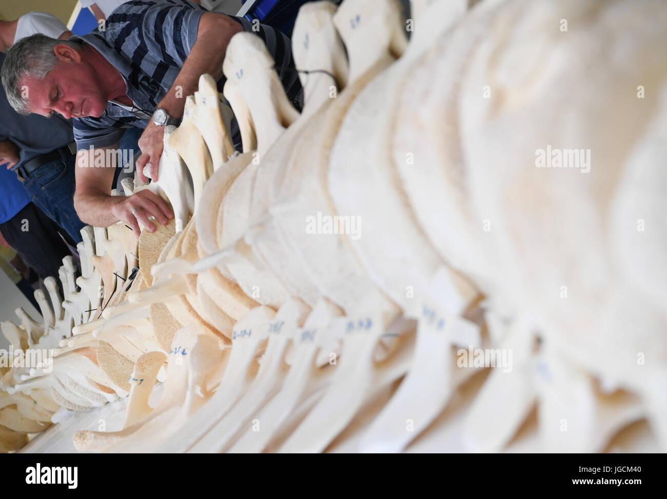 Großzügig Wal Skelett Anatomie Fotos - Anatomie Ideen - finotti.info