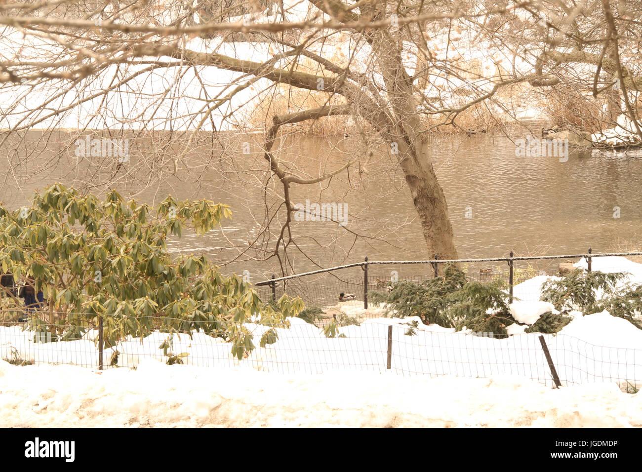 Central Park, New York, Vereinigte Staaten von Amerika Stockbild