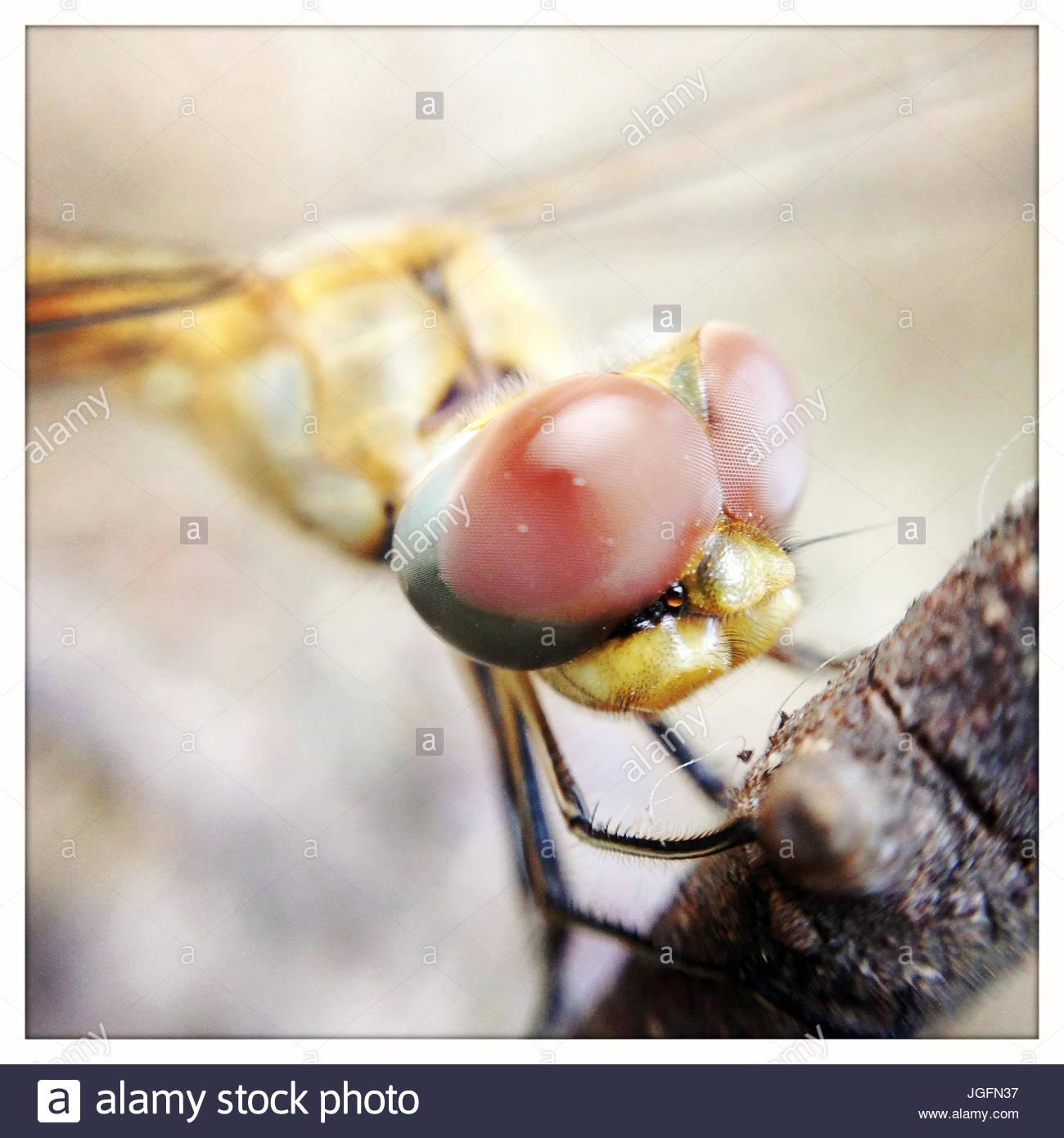 Eine Nahaufnahme einer Libelle. Stockbild