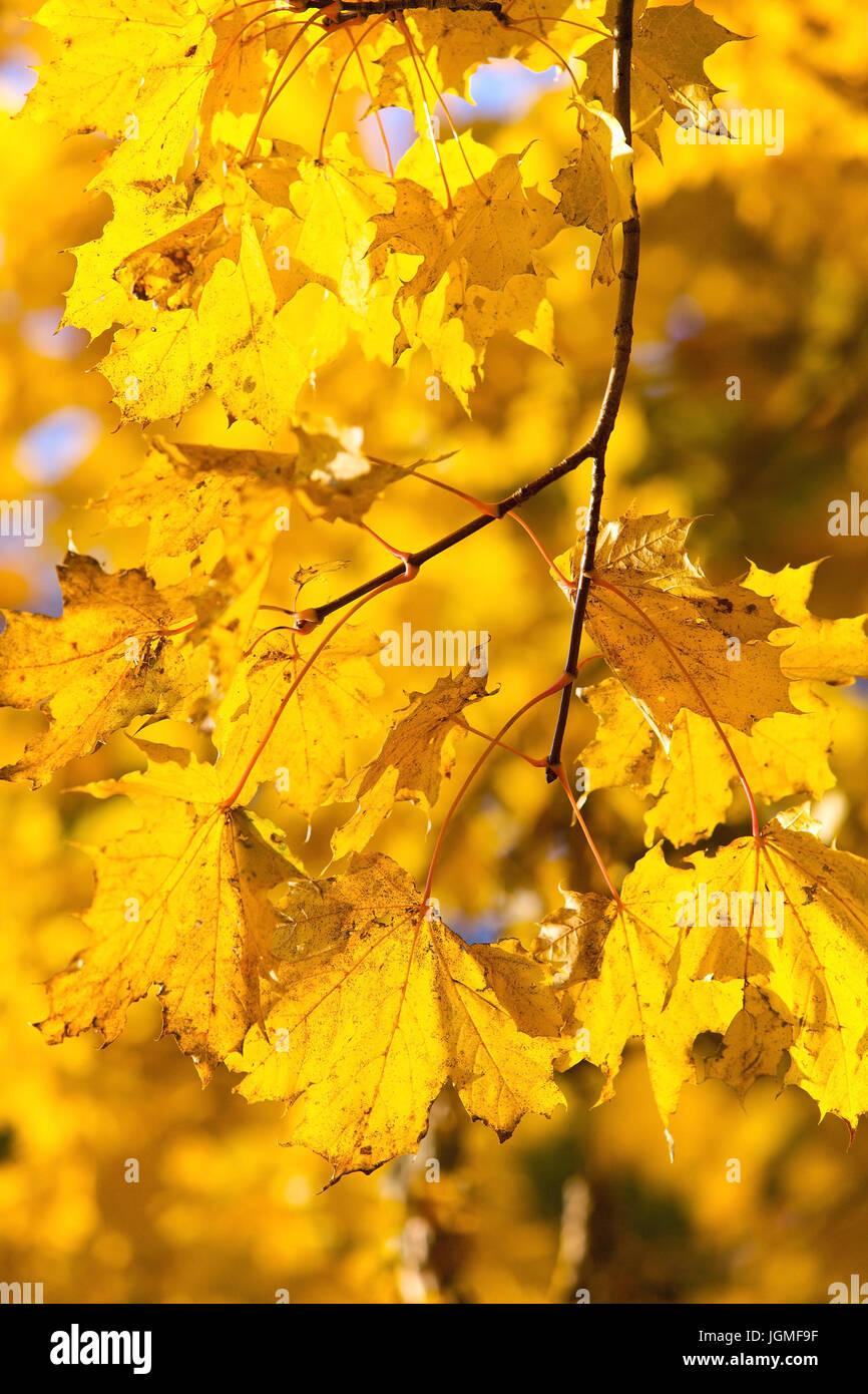 Charmant Herbst Baum Mit Blättern Färbung Seite Bilder - Druckbare ...