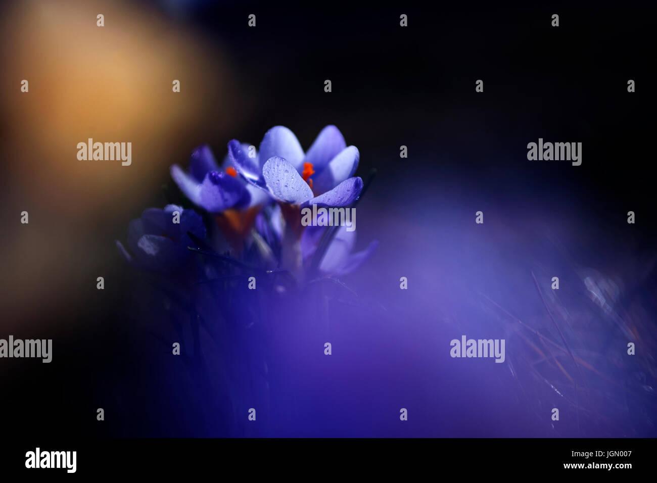 Kreative künstlerische Blume Foto im Sonnenuntergang Stockbild