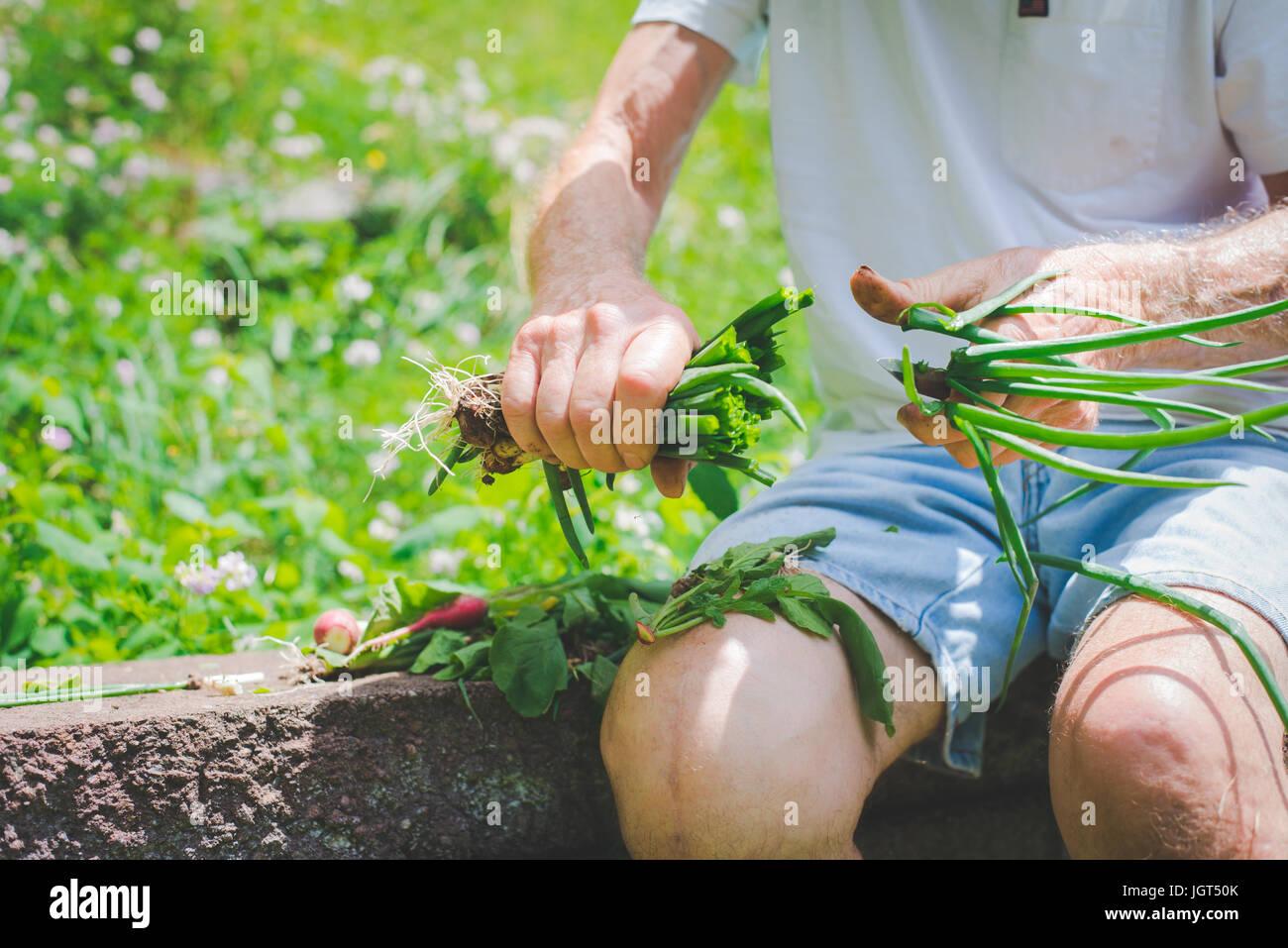 Älterer Mann schneiden die Spitzen aus Zwiebeln. Stockfoto
