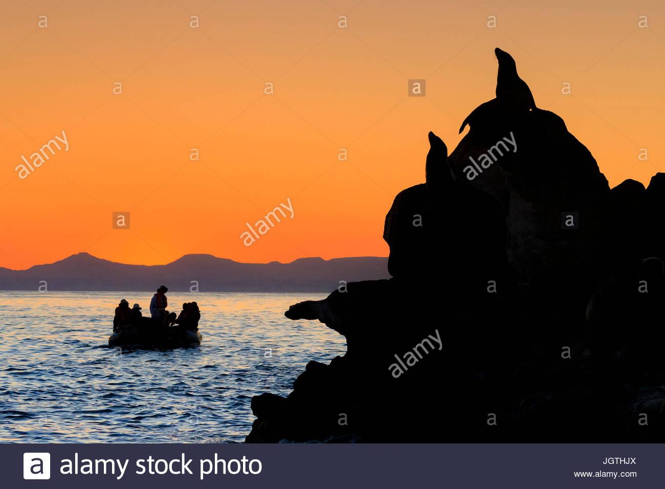 Touristen machen Sie eine Zodiac-Kreuzfahrt bei Sonnenaufgang in Espiritu Santo Archipel Nationalpark. Stockbild