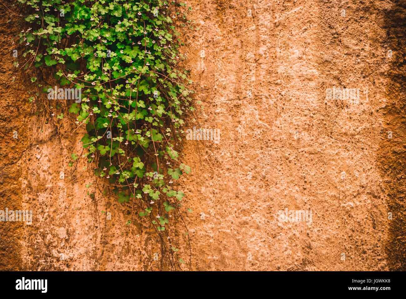 Eisstockschießen grüne Pflanze mit langen Stielen auf der einen ...
