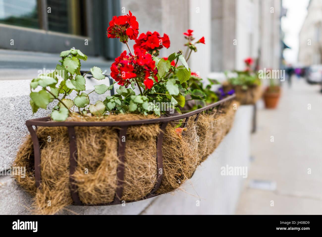 Rote Geranien Blumen Makro Nahaufnahme Auf Fensterbank Aussen