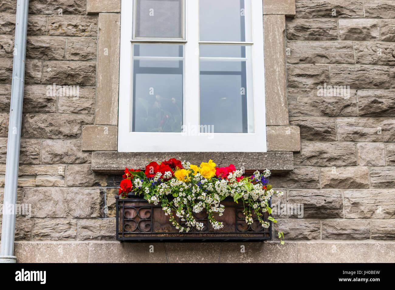 Blumen Korb Closeup Auf Fensterbank Außen Stein Ziegel Europäischen Gebäude