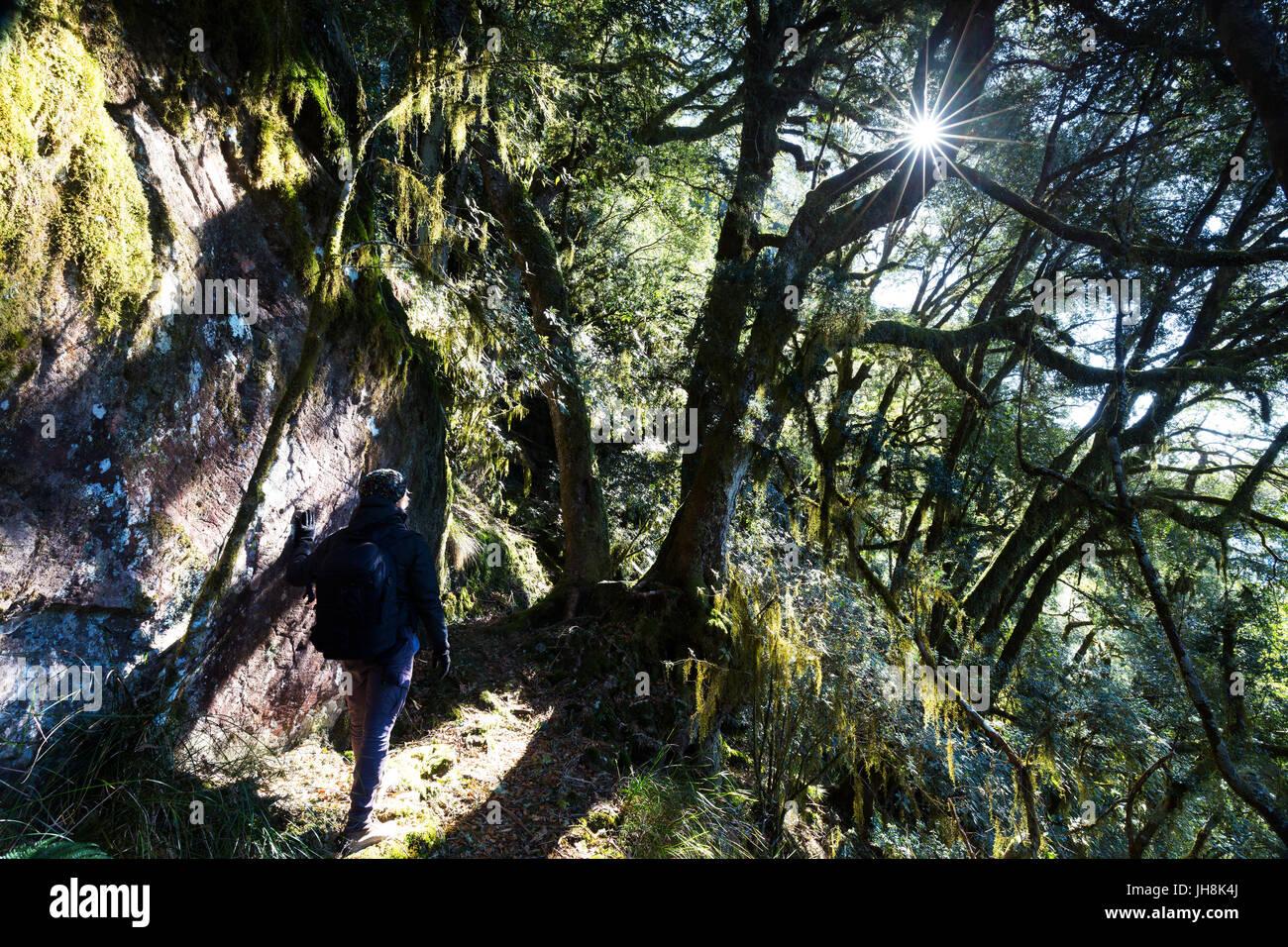 Ein Wanderer beobachtet die Sonne platzen durch einen hängenden Wald an einem kalten Morgen in den Bergen. Stockfoto