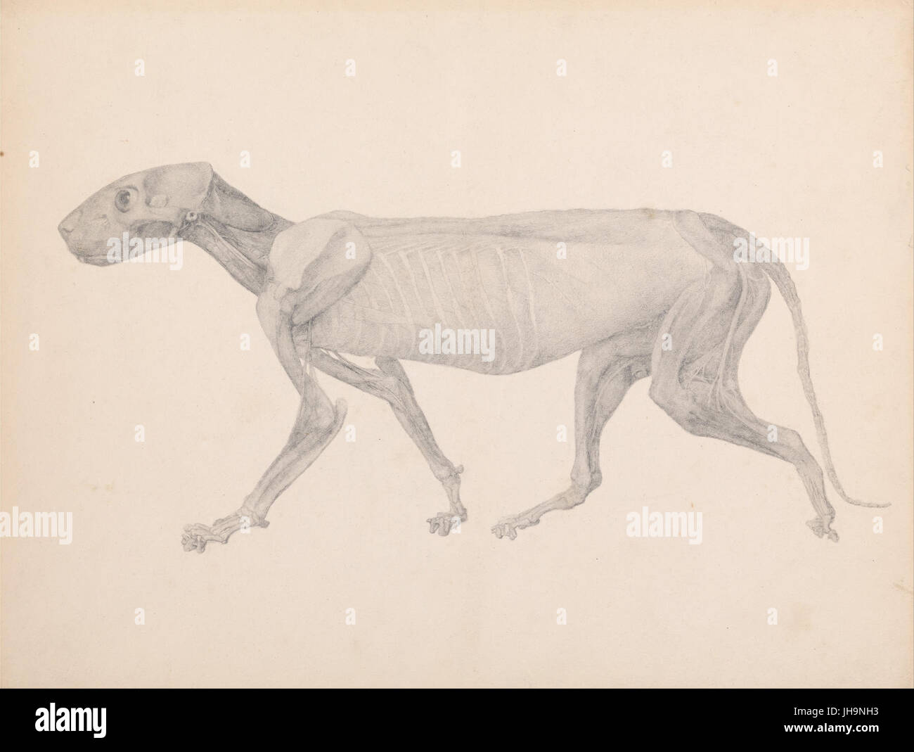 Line Drawing Of Body Stockfotos & Line Drawing Of Body Bilder ...