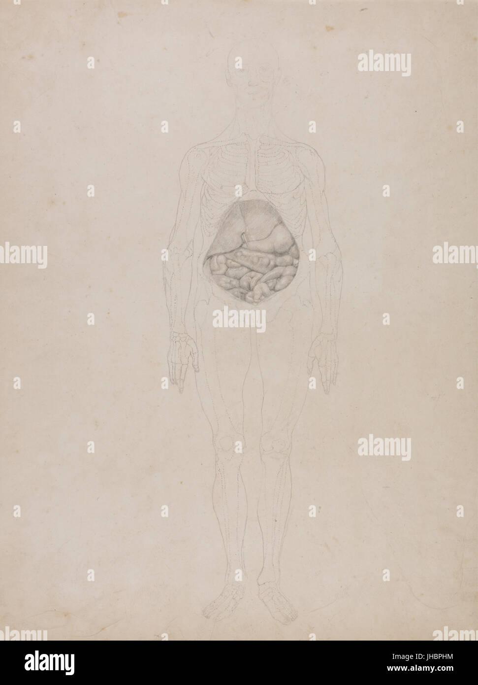 Großzügig Anatomie Struktur Des Menschlichen Körpers Bilder ...