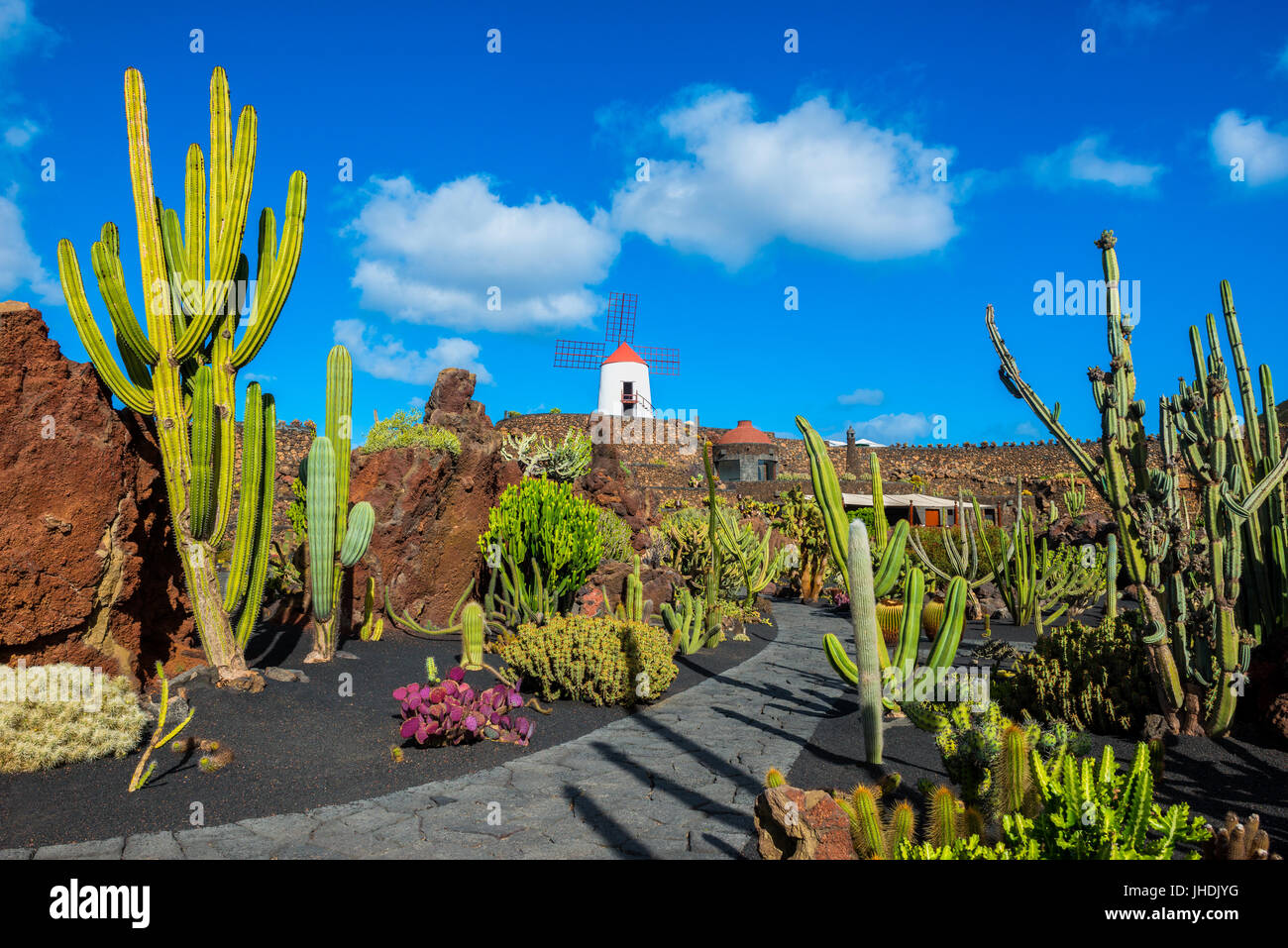 Kakteengarten in Lanzarote, Kanarische Inseln, Spanien Stockbild
